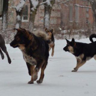 Как бегунам защищаться от бездомных собак 3