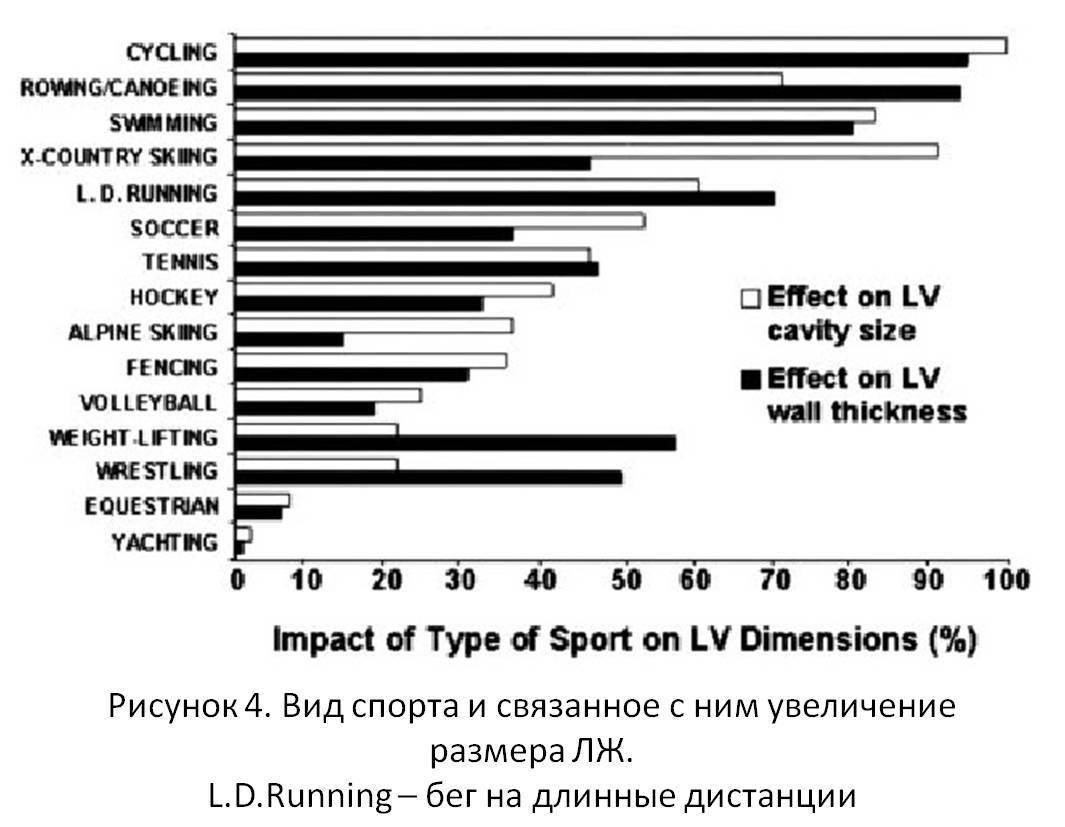 Рисунок 4. Вид спорта и связанное с ним увеличение размера ЛЖ. L.D.Running – бег на длинные дистанции