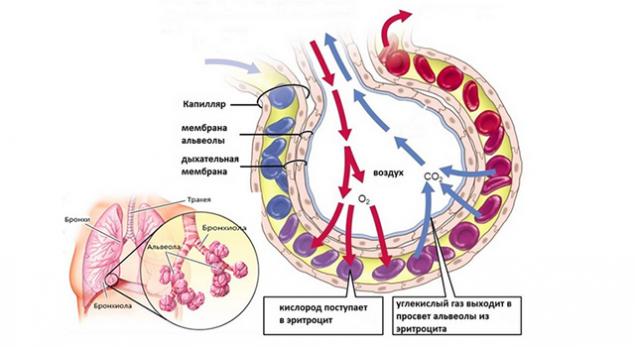 Что такое VO2max и кислородный каскад 3