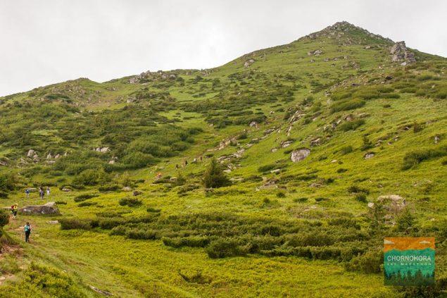 Chornogora Sky Marathon: планктон в горах или как я забросил бег и стал ультрамарафонцем 15