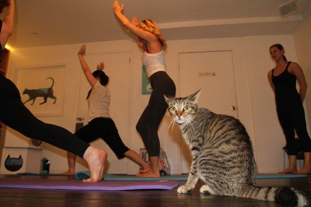 Польза и вред йоги: ответы на вопросы начинающих 3