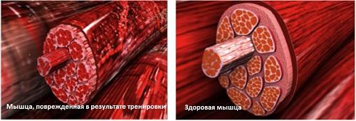 Лактат и восстановление мышц