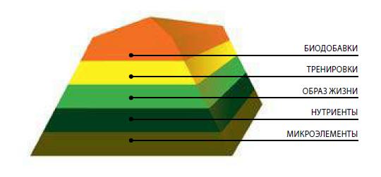 Пирамида оптимизации мужского здоровья