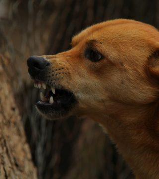 Укусит или нет? Как бегуну предугадать поведение собаки