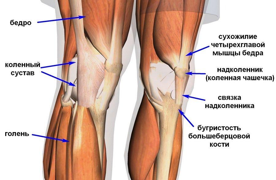 болят сухожилия колена ничем