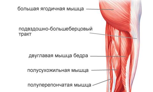 Гид по беговым травмам: травмы мышц задней поверхности бедра