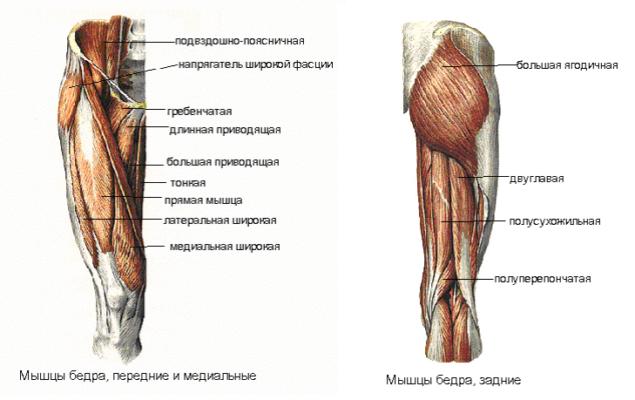 10 упражнений с собственным весом для укрепления мышц бедра